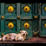 Pies nie jest tylko symbolem szczęścia